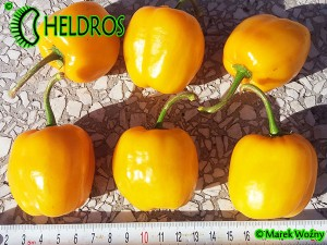 ORANGE GIANT ROCOTO - 10 seeds